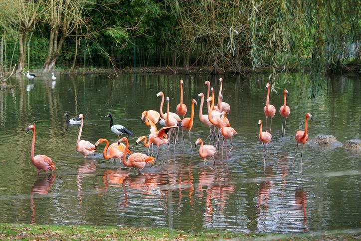 Animals and flora taken in Branféré Park